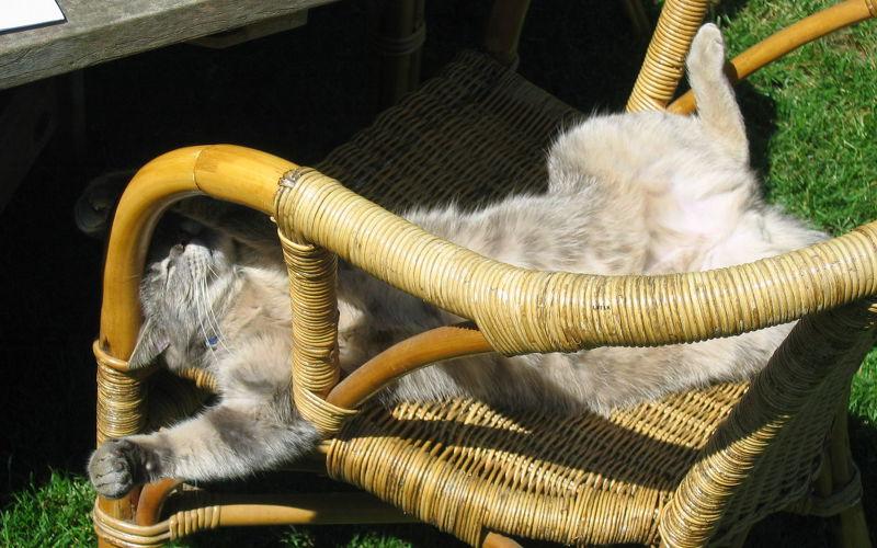 Czy koty są leniwe?