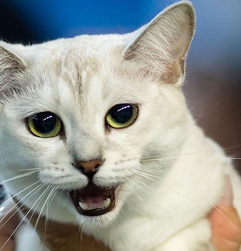 Ile kosztuje wystawa kotów?