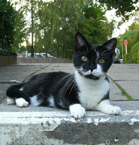 Koty wolno żyjące – bezdomne czy nie?