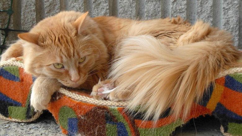 Niezbrylające się żwirki dla kotów