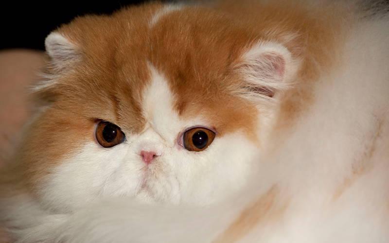 Zbrylające się żwirki dla kotów