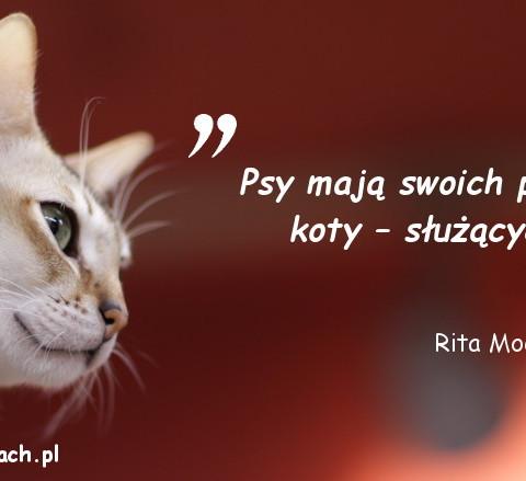 Cytaty o kotach - Rita Moe Brown