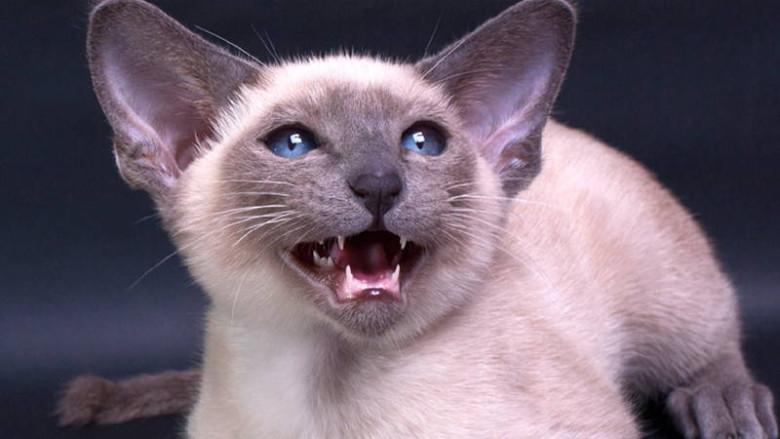 Czy koty boją się ogórków?
