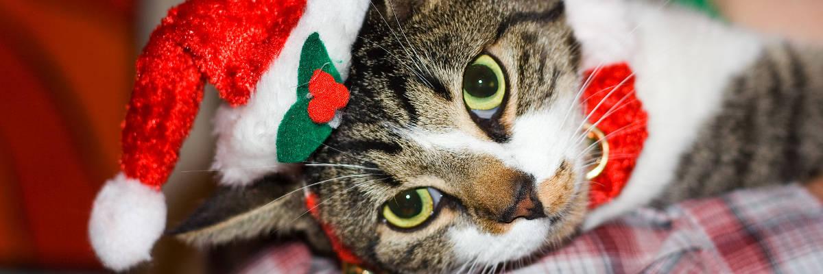 Permalink to:Kot podchoinkę