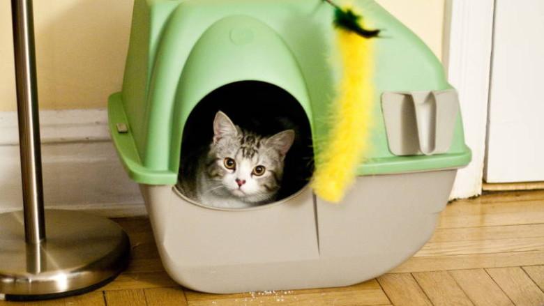 Łopatki do kuwet dla kotów