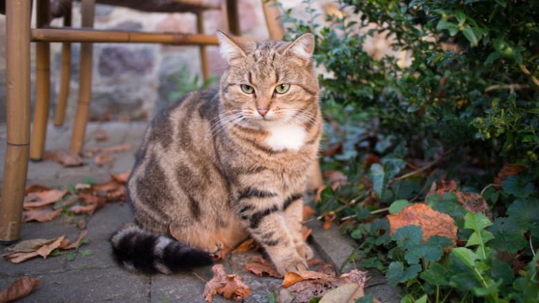 Nie każdy znaleziony kot jest bezdomny!