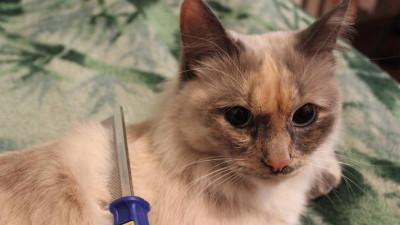 Akcesoria do pielęgnacji dla kotów