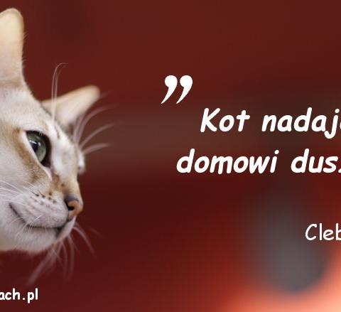 Cytaty o kotach - Clebert