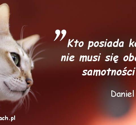 Cytaty o kotach - Daniel Defoe