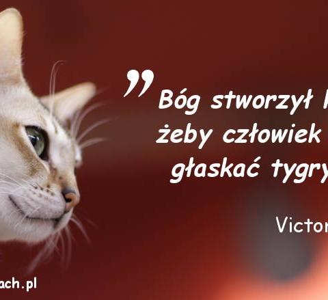 Cytaty o kotach - Victor Hugo
