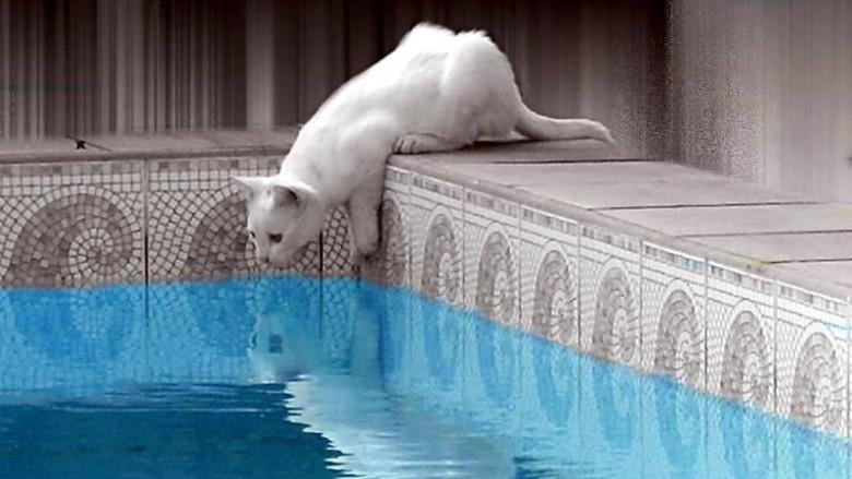 Czy koty potrafią pływać?