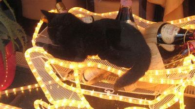 Kot w sylwestra
