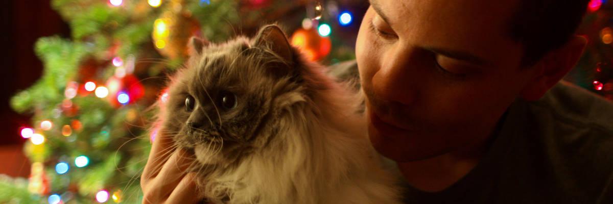 Prezent dla kota pod choinkę