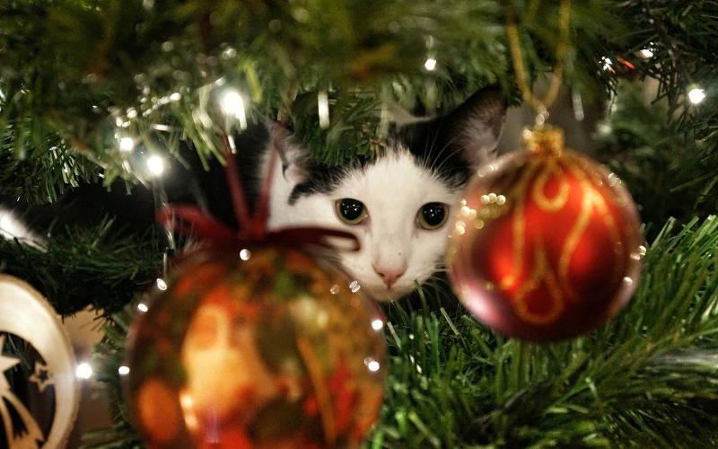 Święta bezpieczne dla kota