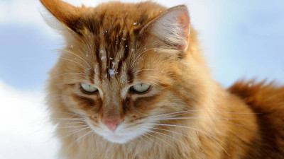 Kot wychodzący zimą