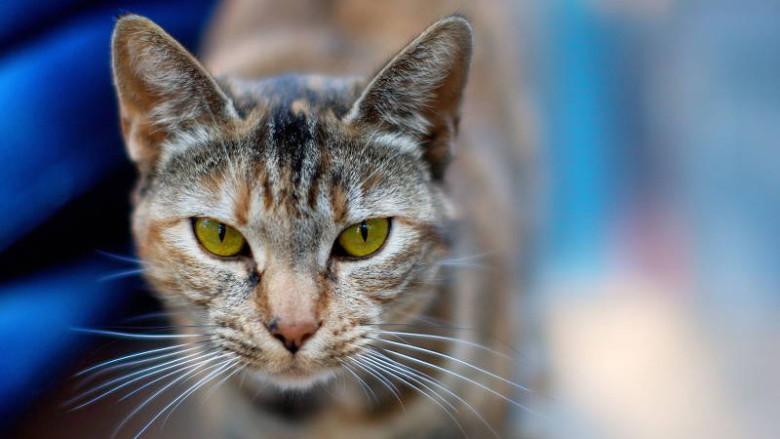 Światowy dzień kota
