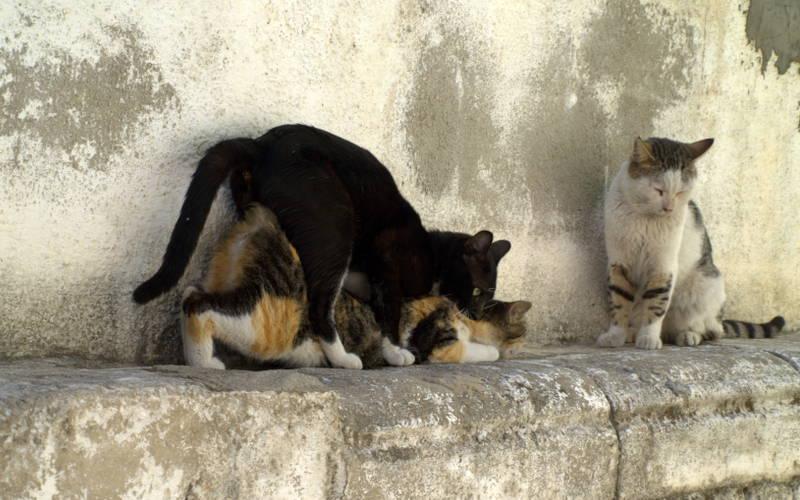 Zaloty u kotów