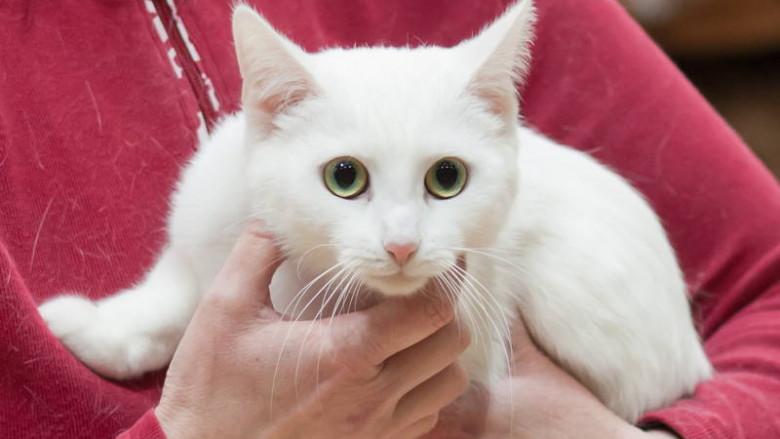 Adopcja kota – Kontrola przedadopcyjna? Dlaczego?