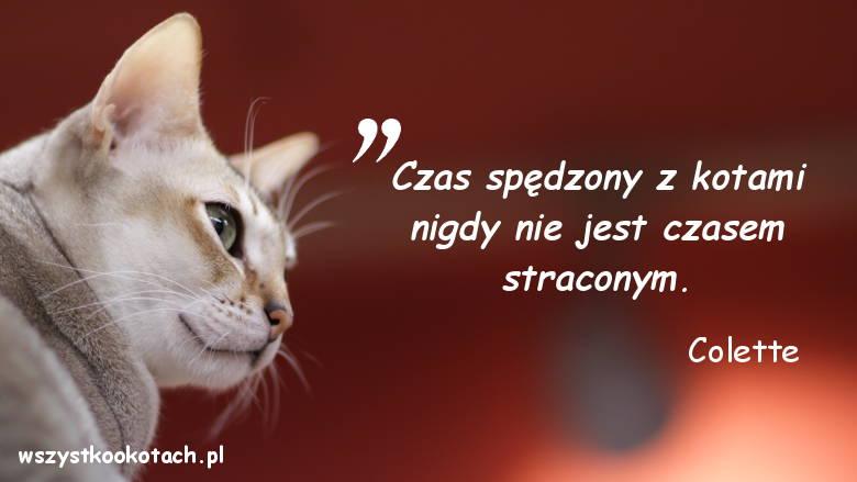 Cytaty o kotach - Colette 2