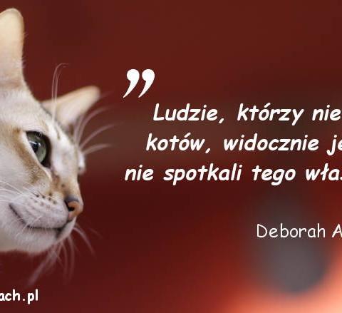 Cytaty o kotach - Deborah A. Edwards