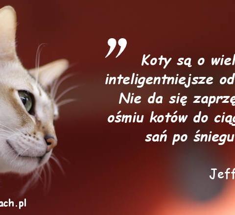 Cytaty o kotach - Jeff Valdez