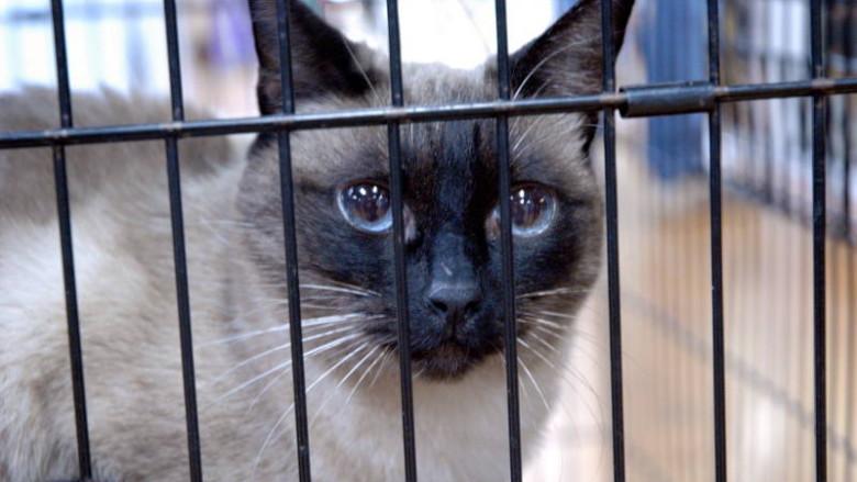 Czy kota można trzymać w klatce?