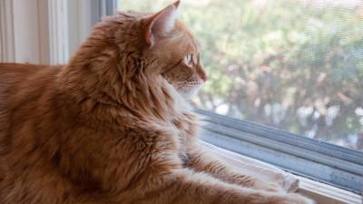 Czy kota można trzymać w mieszkaniu w bloku?