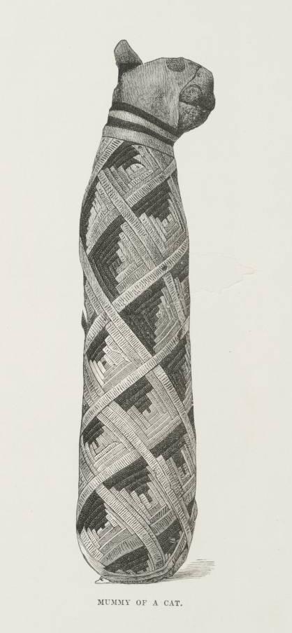 Kocie mumie wstarożytnym Egipcie