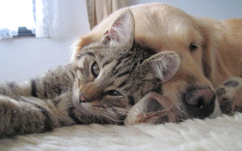 Czy kot może żyć z psem?
