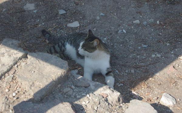 Koty wTurcji