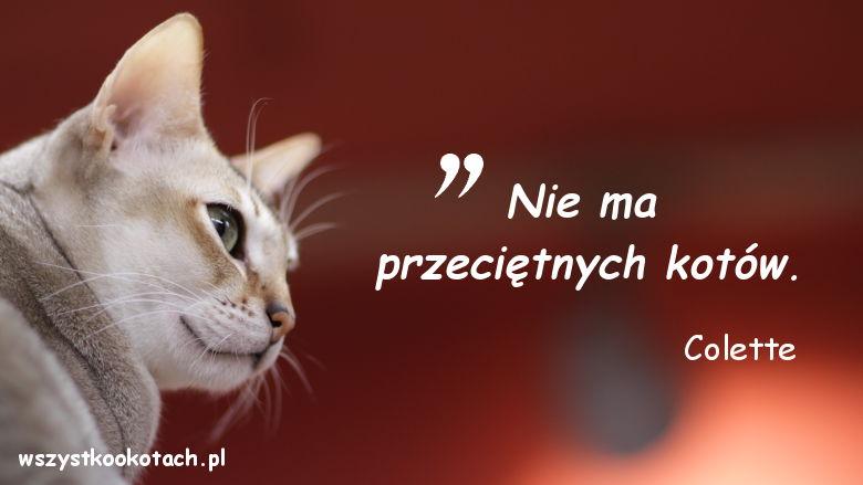 Cytaty o kotach - Colette 3