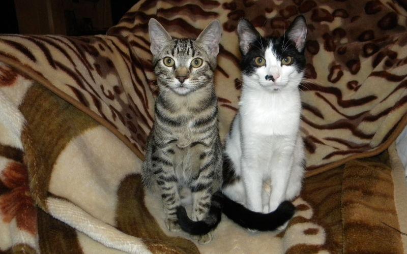 Ile kotów w domu to za dużo kotów?