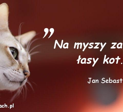 Cytaty o kotach – Jan Sebastian Bach
