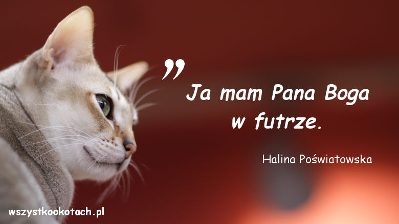Cytaty o kotach - Halina Poświatowska