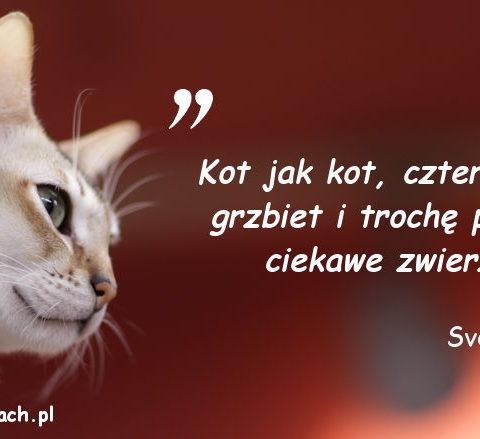 Cytaty o kotach - Sven Darko