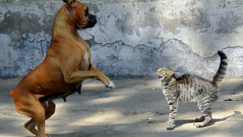 Dlaczego koty syczą?