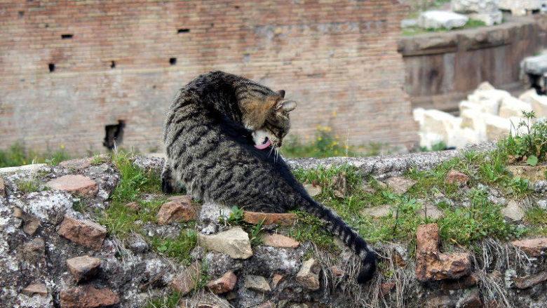 Dlaczego koty tak często się myją?