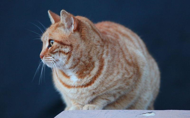 Jak Długo żyją Koty Wszystko O Kotach
