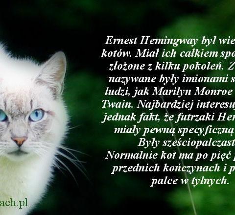 Koty Hemingwaya