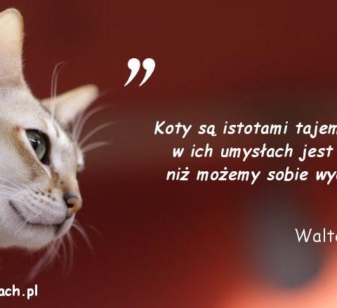Cytaty o kotach - Walter Scott