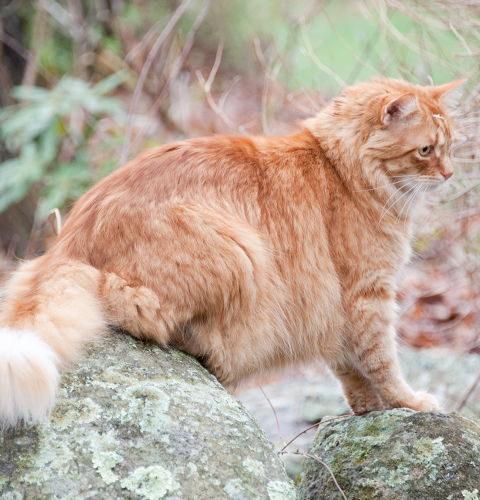 Do czego kotu potrzebne jest futro?