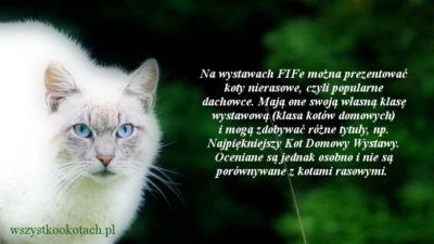 Koty nierasowe i wystawy kotów