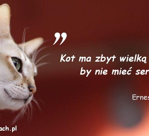 Cytaty o kotach - Ernest Menaul
