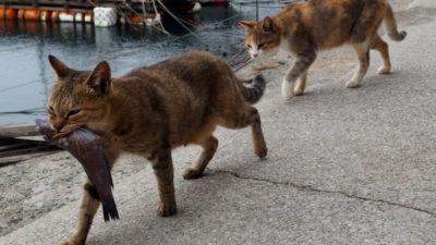 Czy kot może jeść surowe ryby?