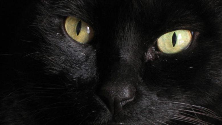 Koty, czarownice i czary