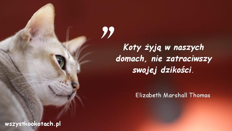 Cytaty o kotach - Elizabeth Marshall Thomas