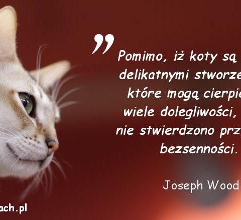 Cytaty o kotach - Joseph Wood Crutch