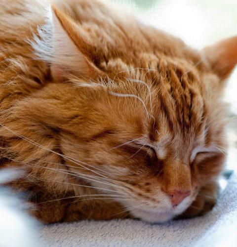 Hipoalergiczne karmy dla kotów