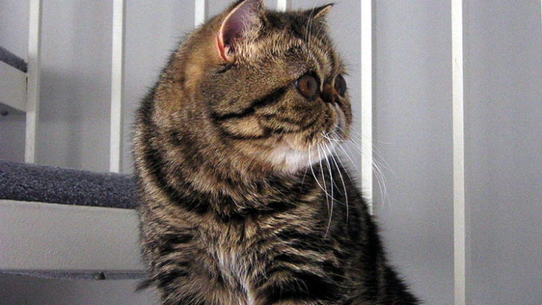 Bentonitowe żwirki dla kotów