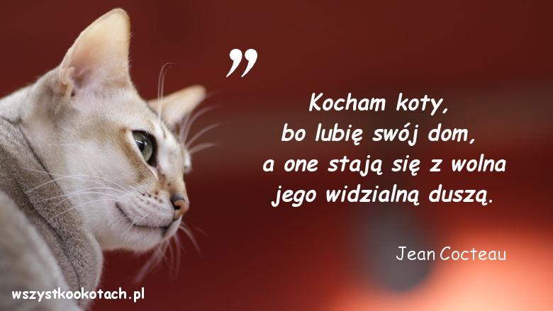 Cytaty o kotach - Jean Cocteau
